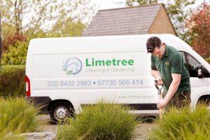 Limetree-Planting-6