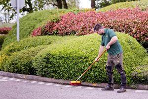 Limetree-Sweeping-2